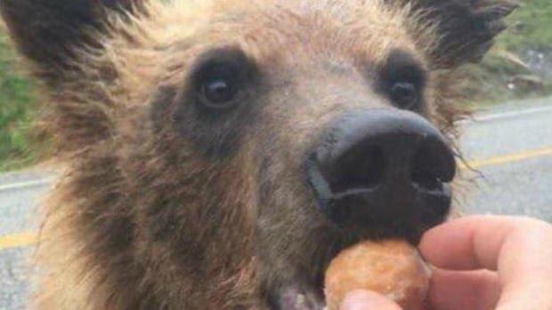 bear-timbit.jpg